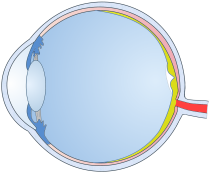 Optic Nerve Support